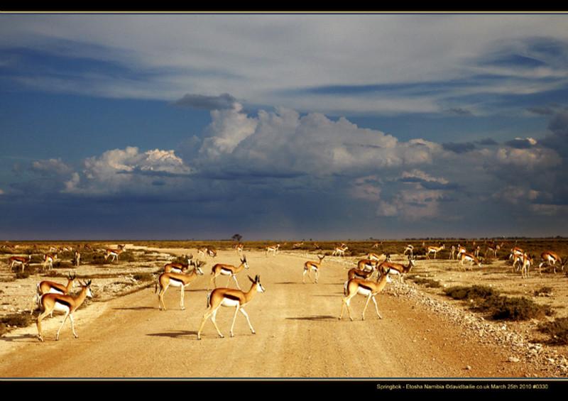 100325-Namibia-0330Springbok - Beyond the UK - Namibia