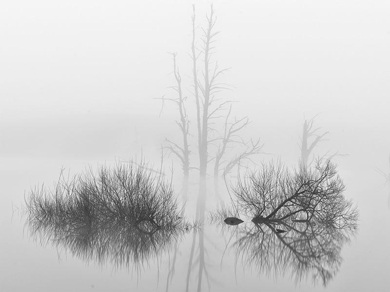 Mannus Mist - Black and White