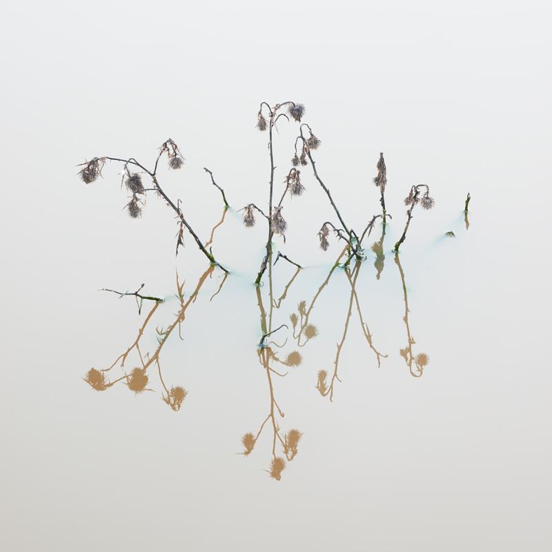 Thistles - Recent Work