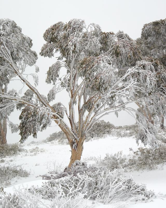 Cabramurra blizzard #1 - Recent Work