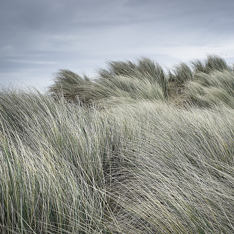 Norfolk Coast landscape photography of Gun Hill near Holkham