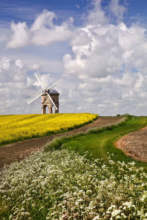 Chesterton Windmill with bright yellow rape field under white fluffy clouds