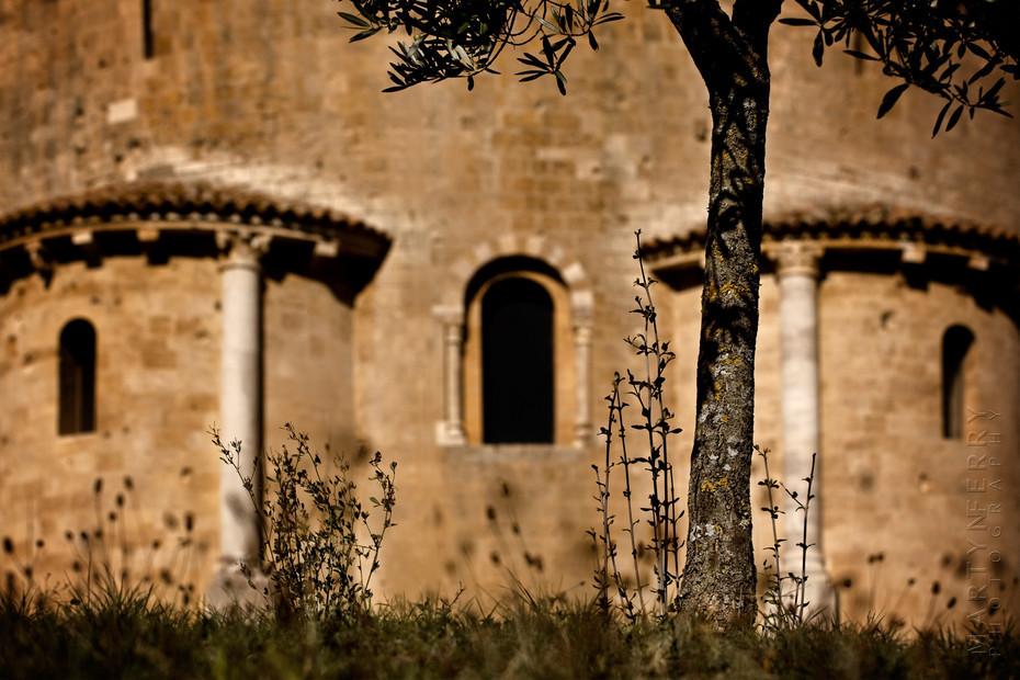 St Antimo Olive Tree - Italy