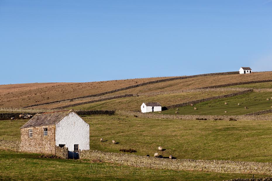 Three white Pennine barns on the landscape