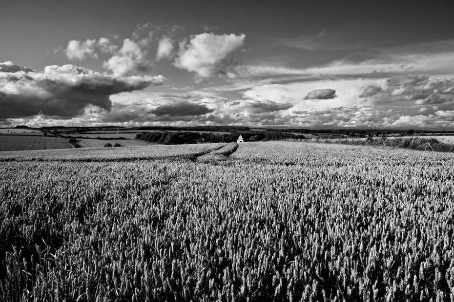 Striking black and white photo of a wheat field under clouds