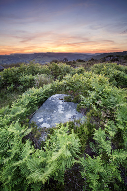 Photograph of rock and ferns at Baslow Edge in the Peak District