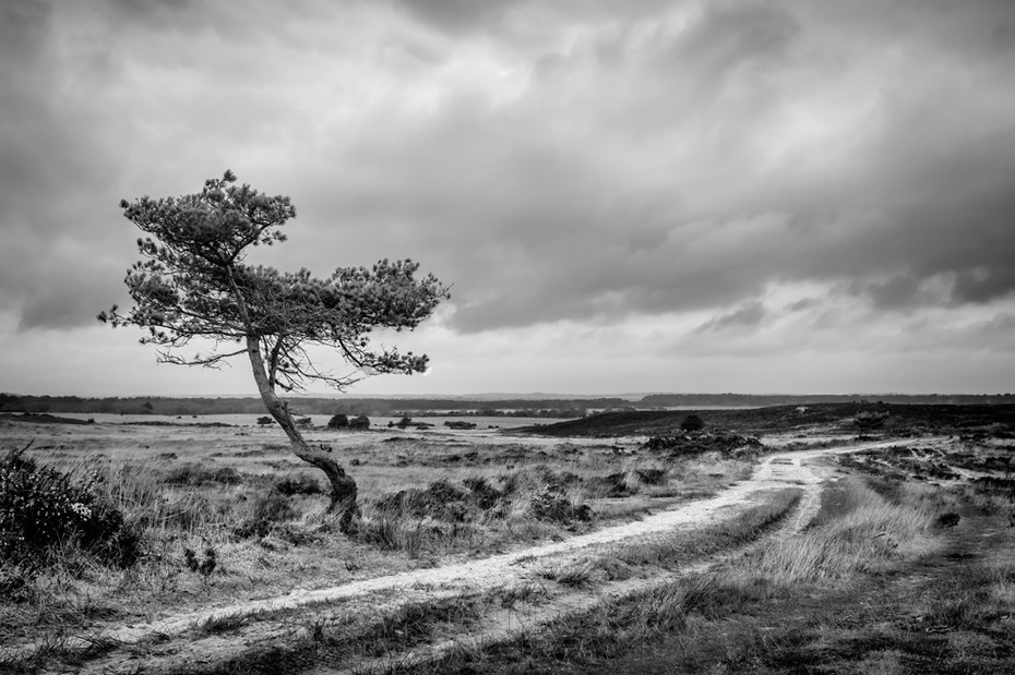 Monochrome image of lone tree and empty track in Studland