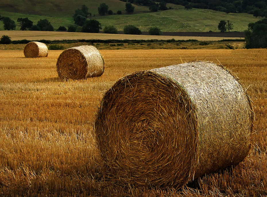 An image of a row of hay bales on a summers evening in the Cotswolds