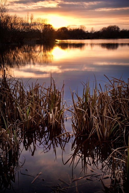 Sunset image of reeds and a lake near Witney Oxfordshire