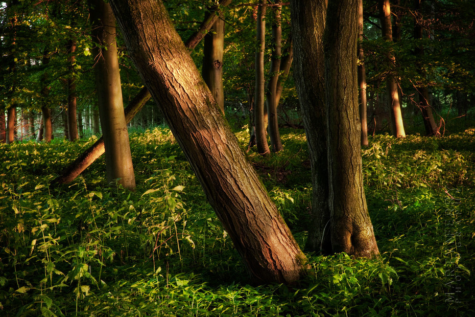 Beautiful image of trees in the warm evening sun