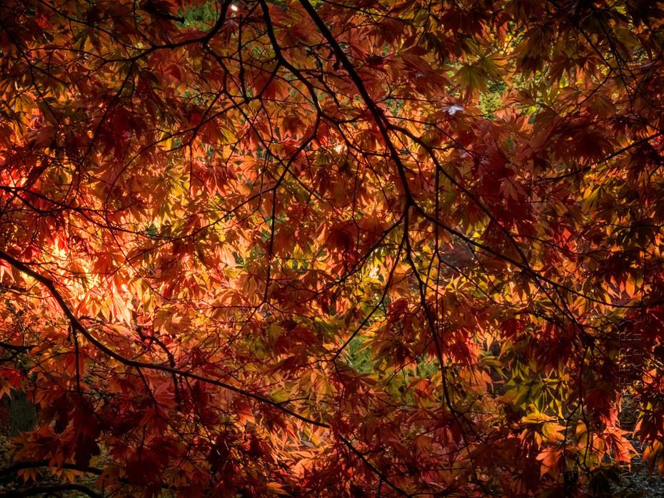 Soft sunshine highlights autumn leaves