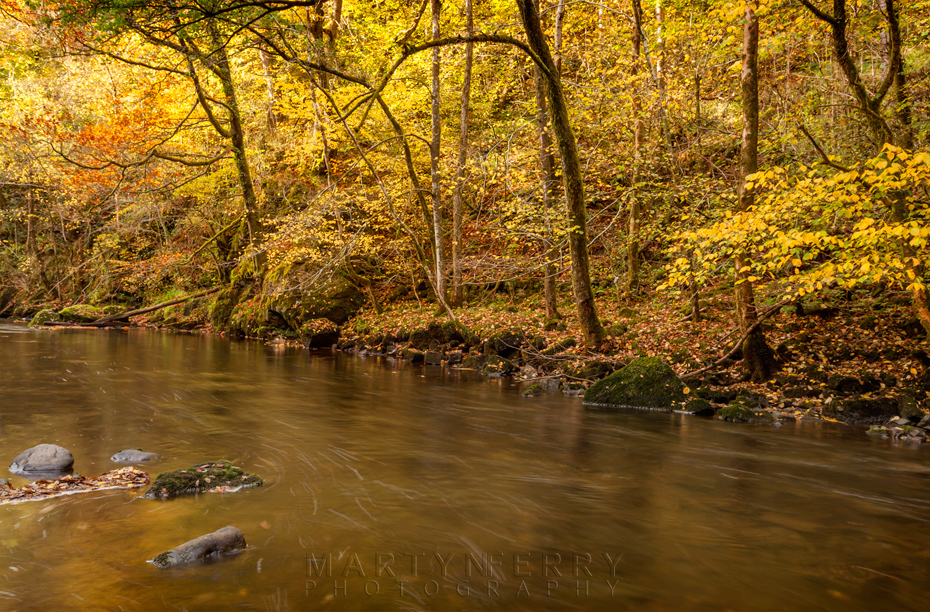 Autumn gold on the Afon Mellte