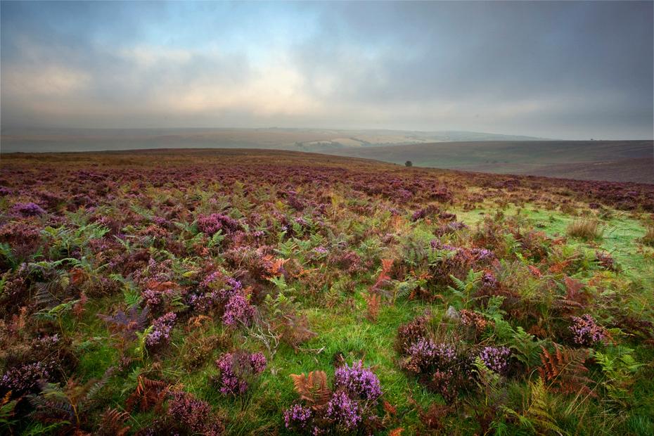 Morning mist over colourful Exmoor moorland