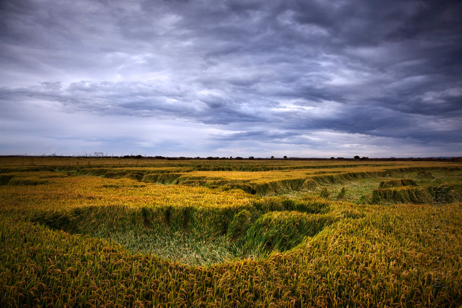 Comporta rice field and stormy sky