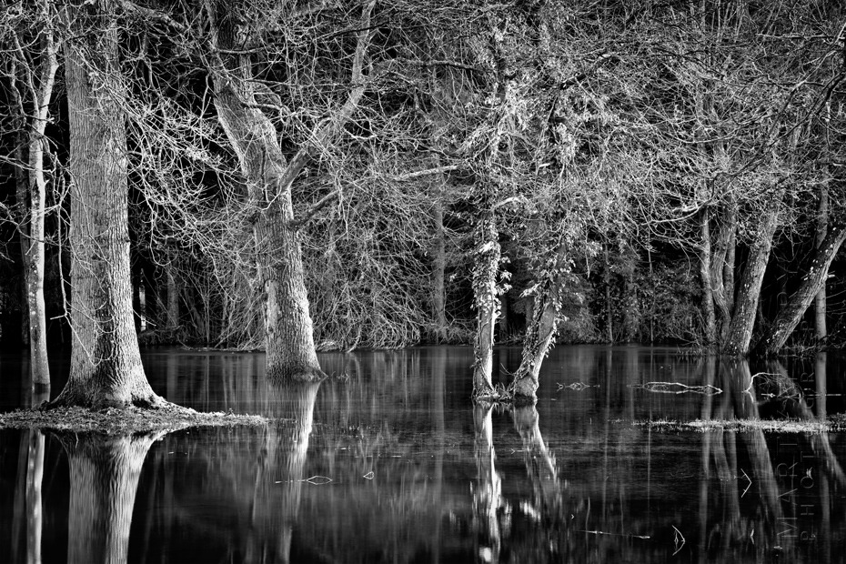 Striking image of trees in a flooded valley