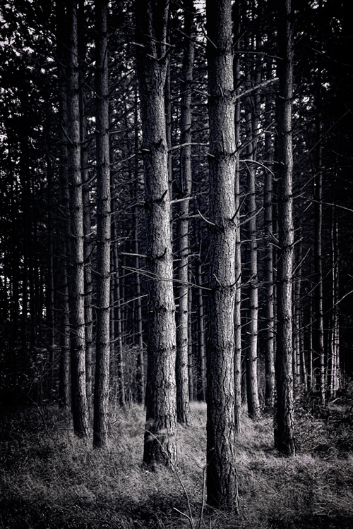Stunning black and white scene of a dark wood