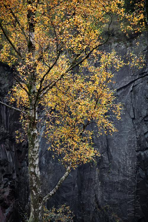 Stunning silver birch image