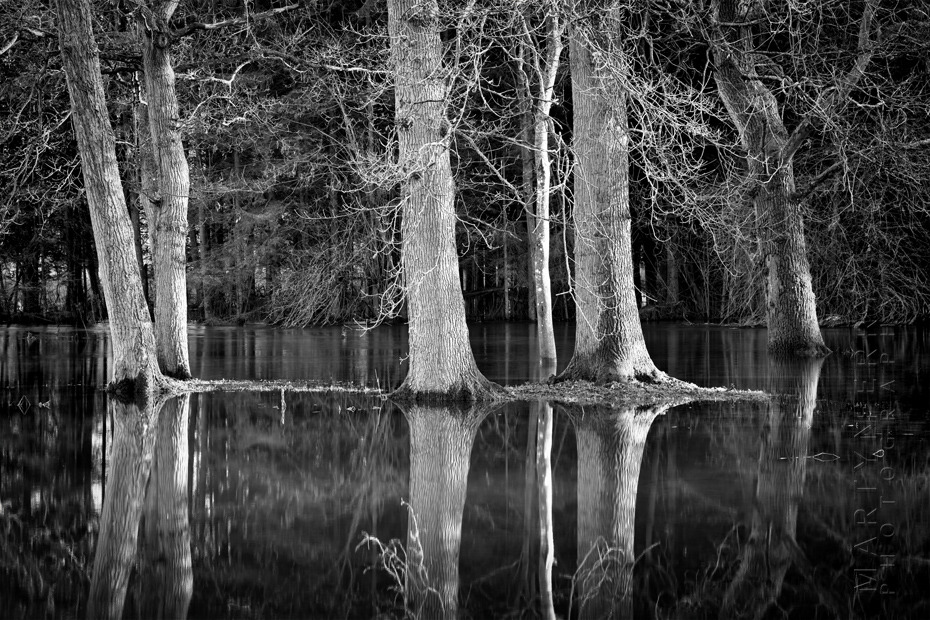 Beautiful black and white image of trees reflected in flood water