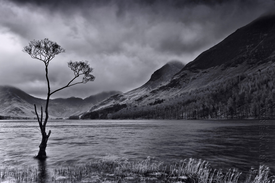 Tree at Buttermere in dramatic black and white