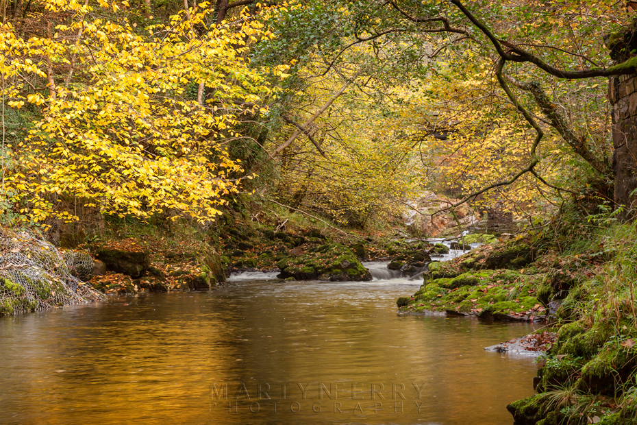 Golden autumn colour along the Afon Mellte in Wales