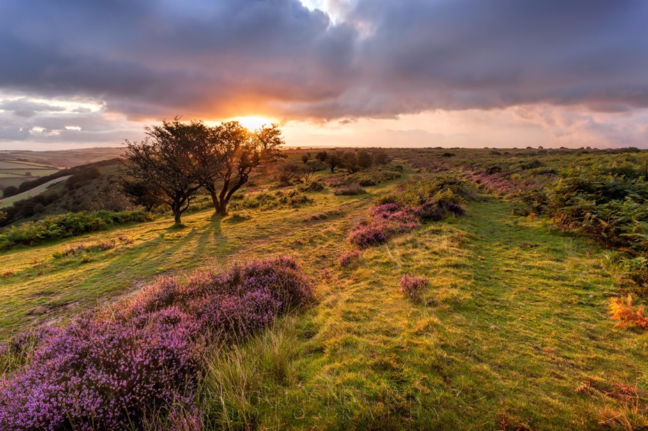 Early morning sun lights up the Exmoor moorland on Winsford Hill