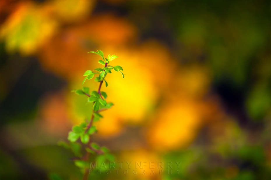 Bright green shoot with vibrant autumn colours behind