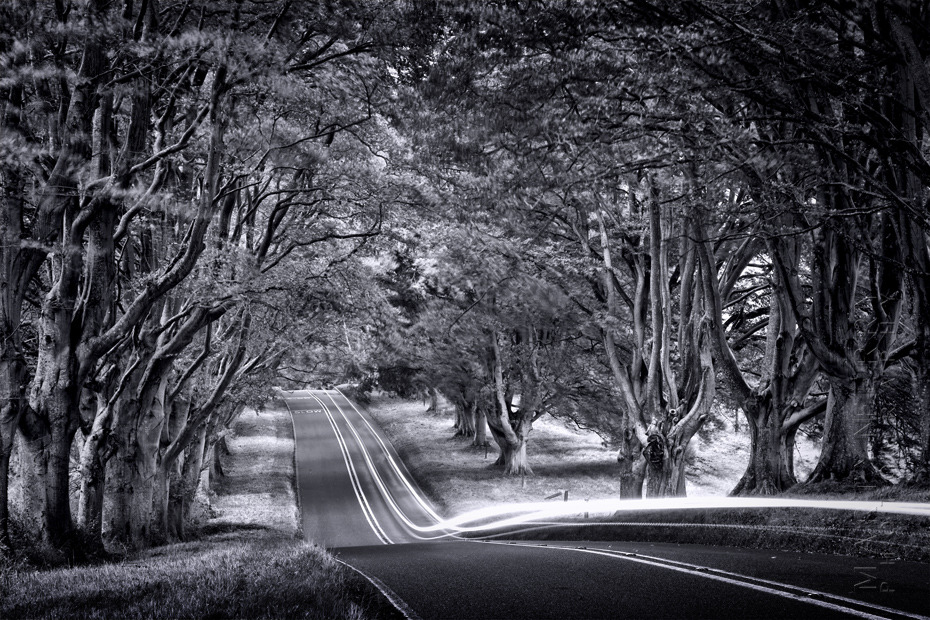 Amazing image of traffic trails under Kingston Lacy trees