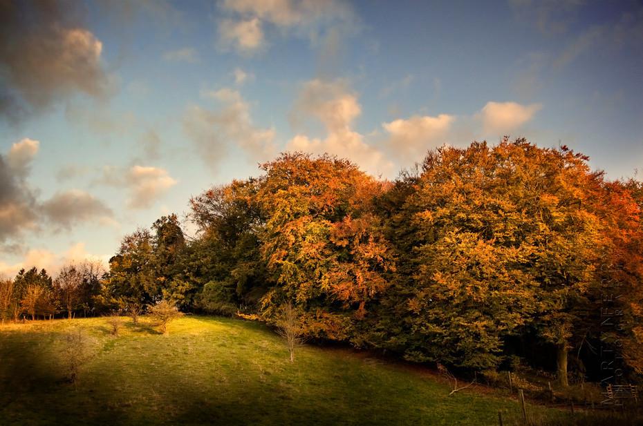 Beautiful beach trees in full autumn colour