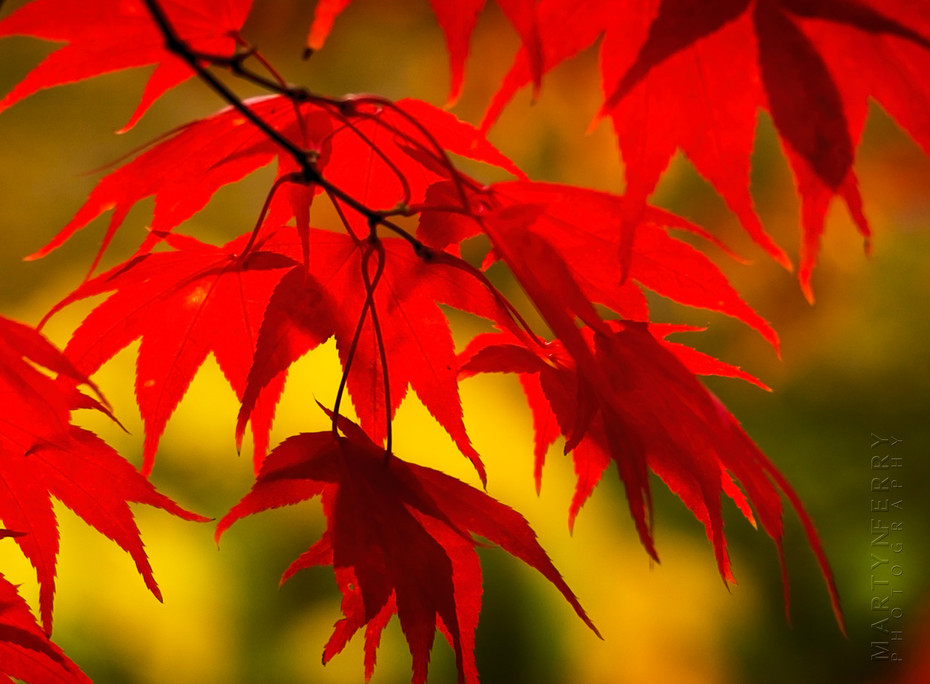 Stunning autumn colour of reds and yellows