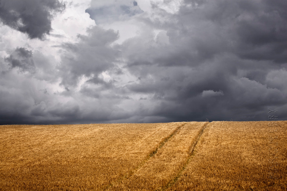 Image of a Cotswold wheat field under dramatic clouds