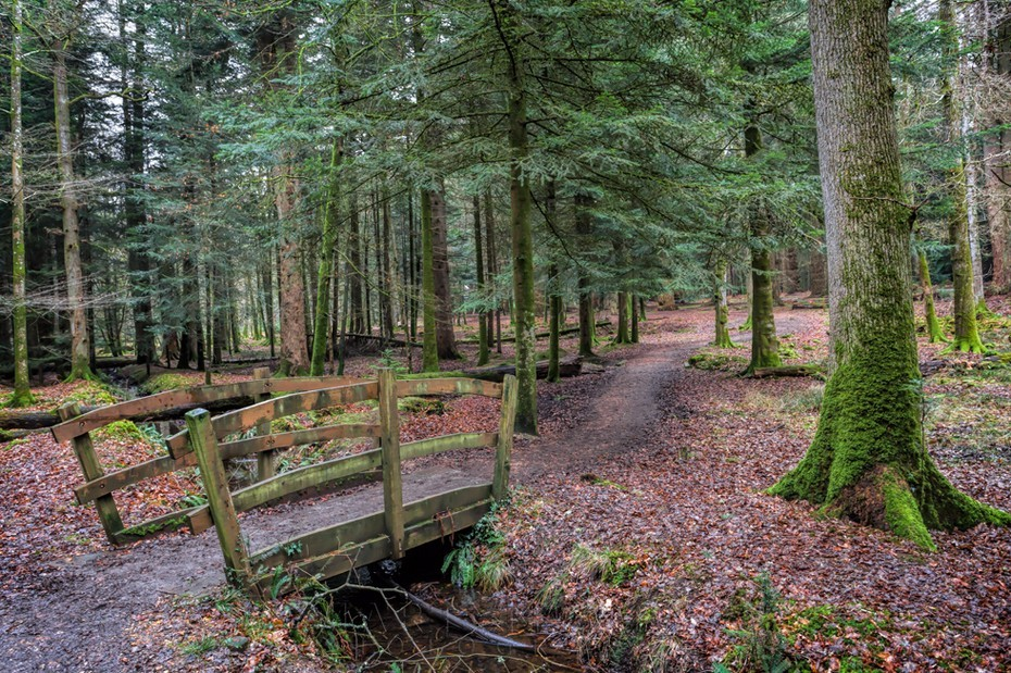 Wooden bridge in the New Forest Hampshire
