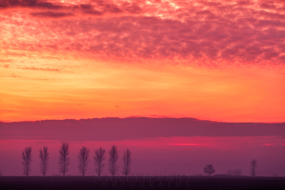 Evening mist tree line at sunset in Cambridgeshire