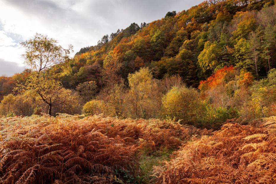 Autumn colours line cloak the valley near Pontneddfechan