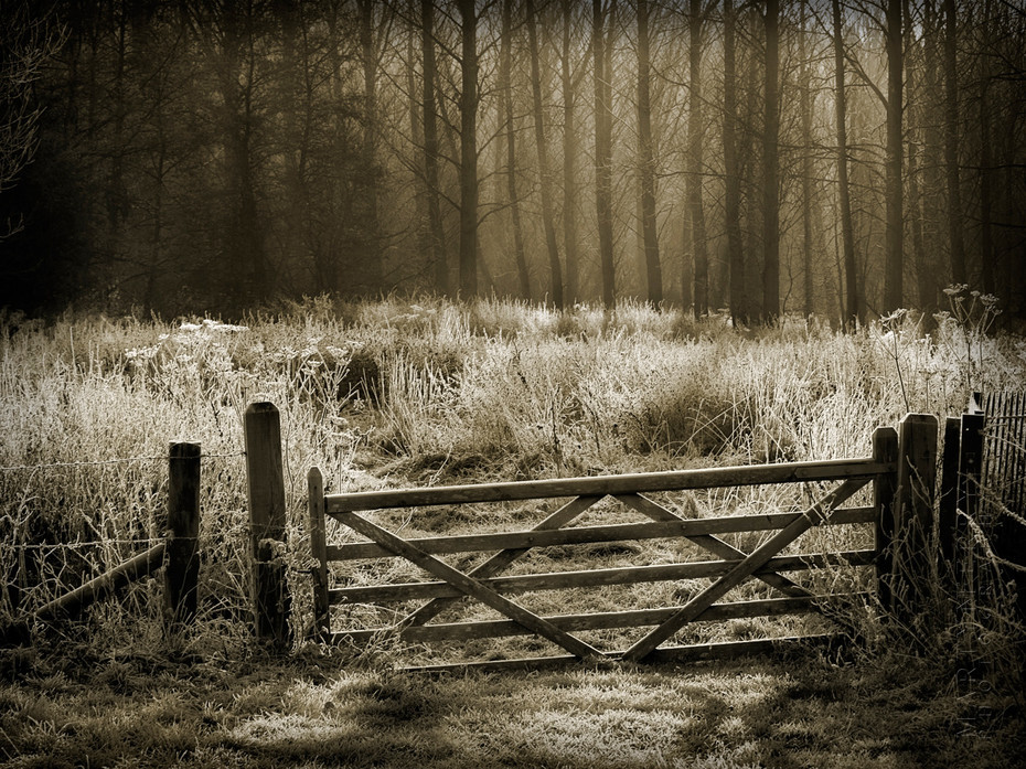 Beautiful winter photograph of a gate and trees covered in frost
