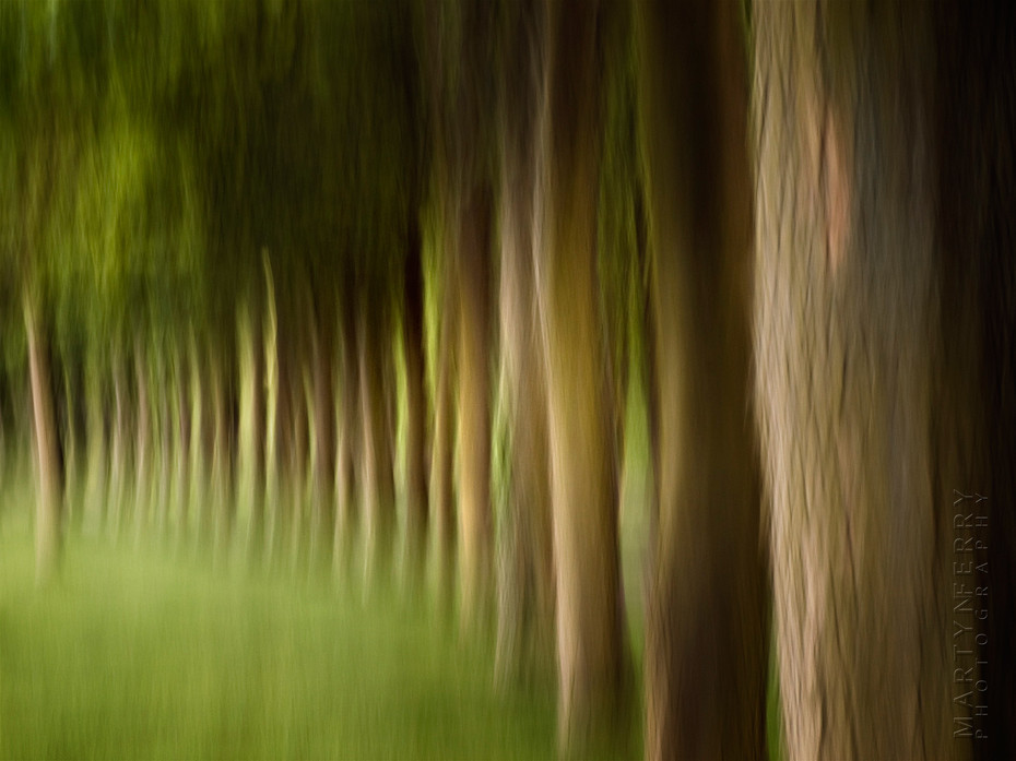 Stunning view of a tree line in movement