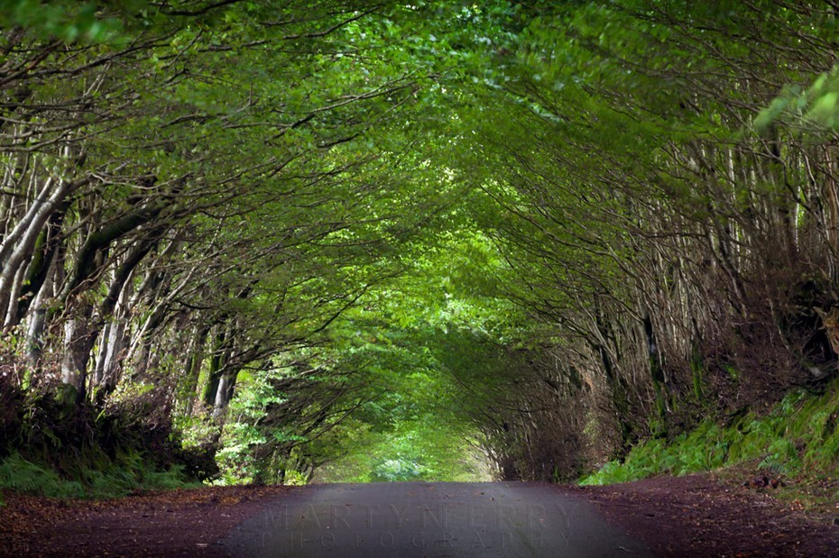 Exmoor lane rises up beneath a canopy of trees