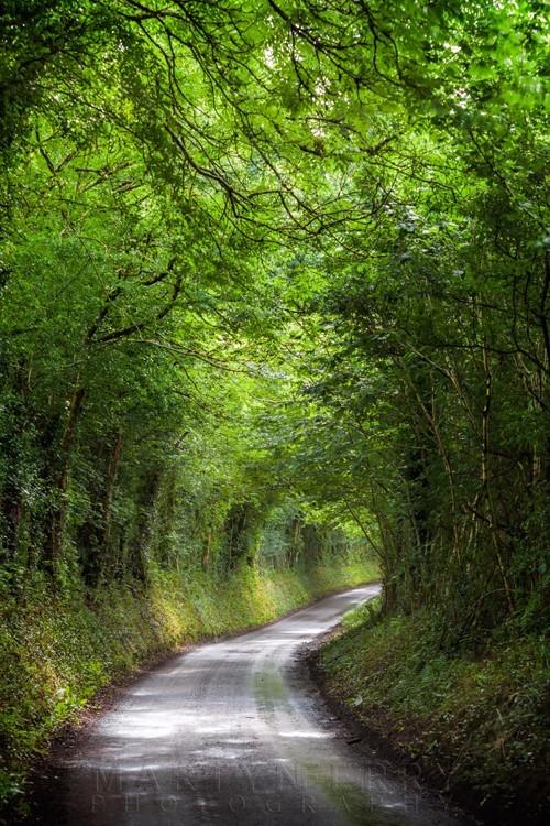 A little winding lane beneath trees in Exmoor