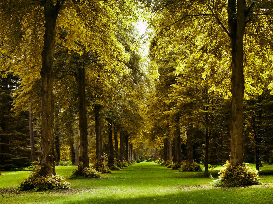 Stunning autumn image of a huge row of lime trees