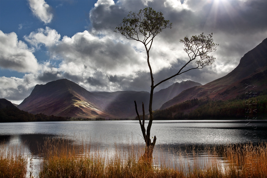 Buttermere tree in the morning light