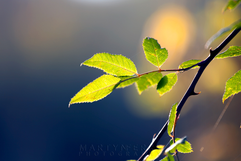 Fresh green leaves backlit by the sun