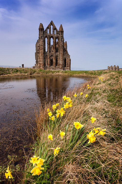 Vibrant daffodils in front of Whitby Abbey on a sunny day