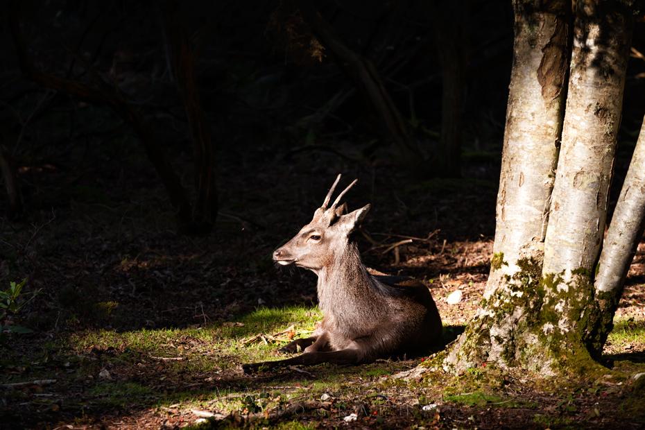 Roe deer basks in the afternoon sunlight