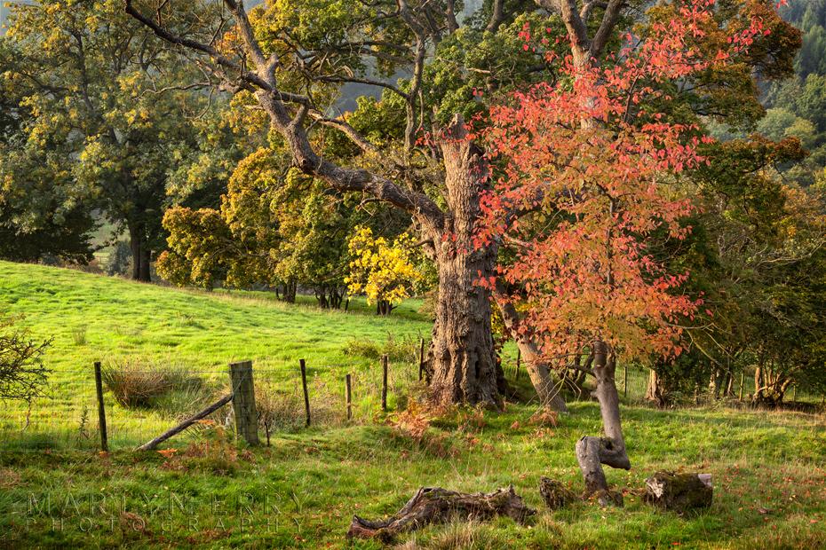 Stunning autumn colour on the Yorkshire Moors
