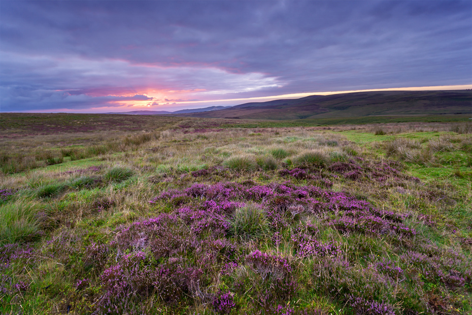 Sunrise lights up the Exmoor moorland and heather