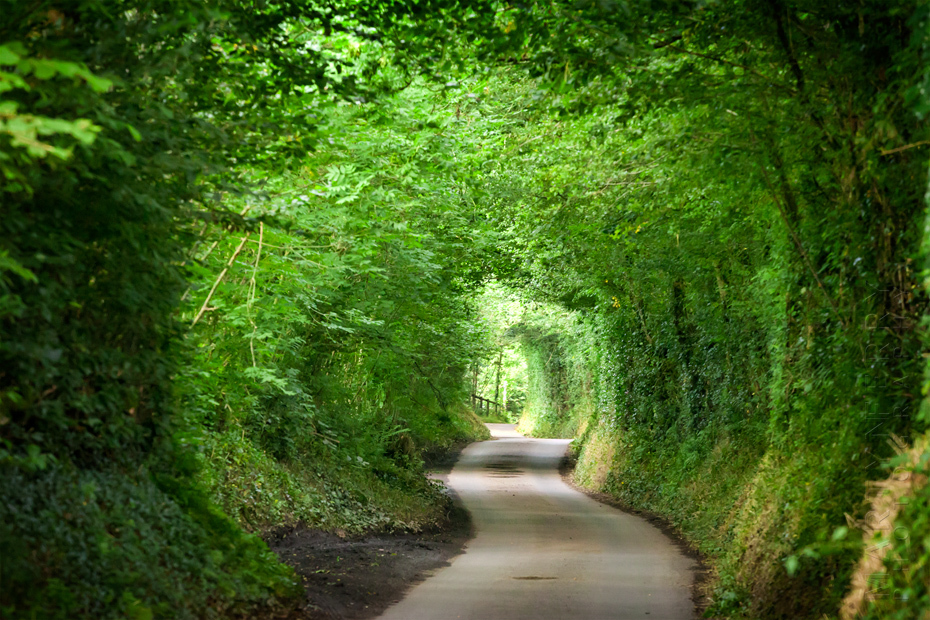 Green tunnel in Exmoor National Park