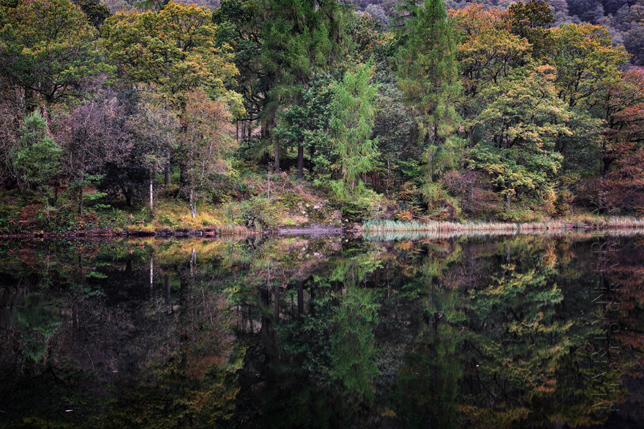 Beautiful autumn colours of trees reflected in water