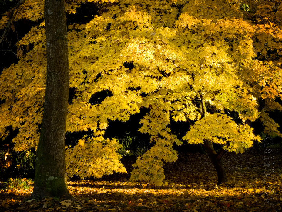Stunning autumn colour at Westonbirt Arboretum