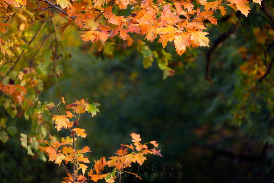 Bright orange leaves of autumn frame this woodland image