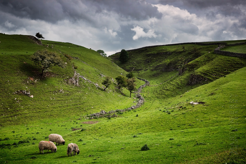 Bucolic image of a a Peak District valley with sheep