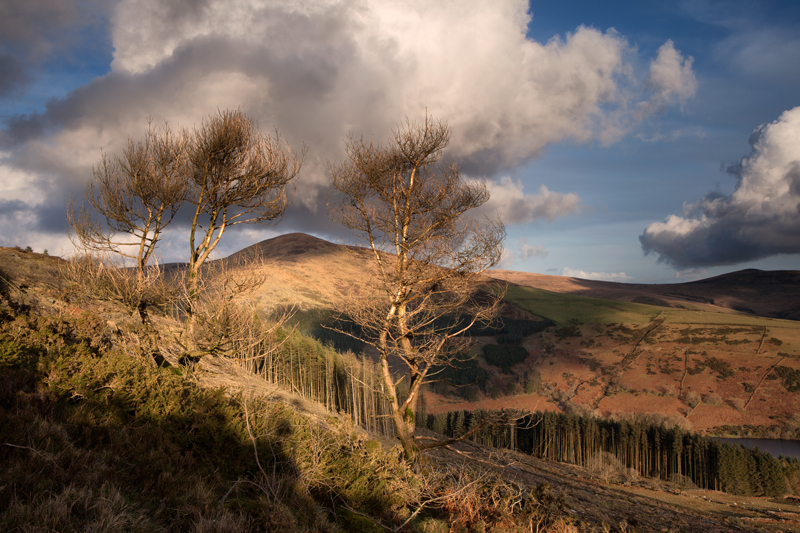 Carraghan between the Pines - Isle of Man Landscapes